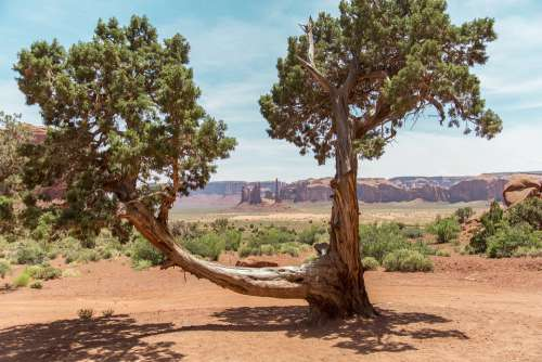 Monument Valley Tree Landscape Nature Utah
