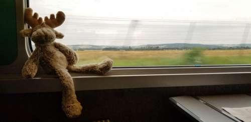 Moose Train Landscape Window Transportation