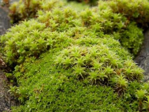 Moss Green Undergrowth