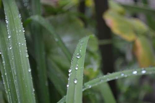 Natural Water Green Life Nature Wet Rain