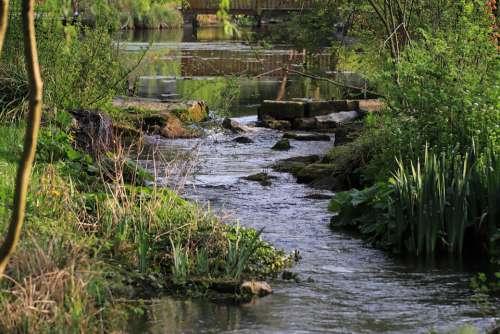Nature Water Bach Idyll