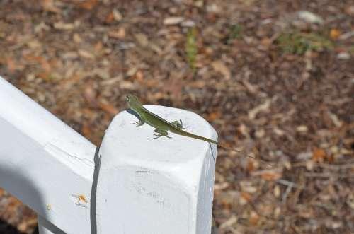 Nature Outdoors Wildlife Lizzard Animal Gecko