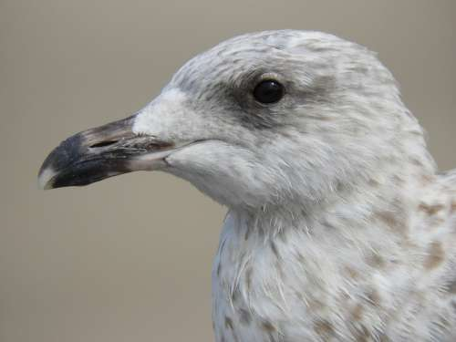 Nature Bird Fauna Animal Gull Eyes