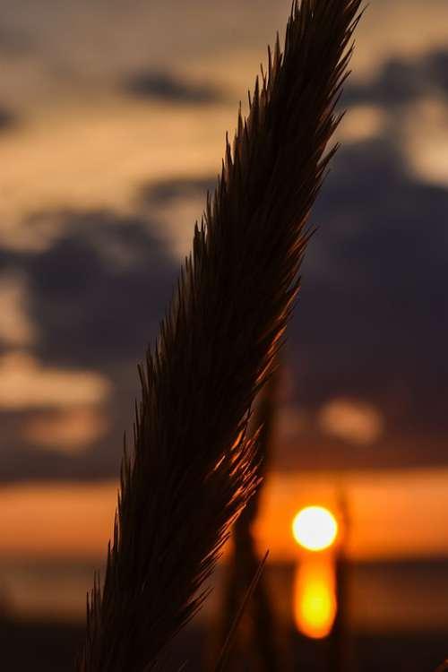 Nature Sunset Landscape Sky Evening Dawn Clouds