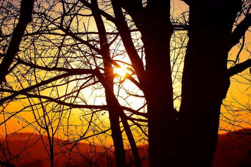 Nature Sun Trees Branches Aesthetic Forest