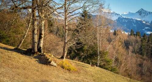 Nature Spring Roe Deer Meadow Trees