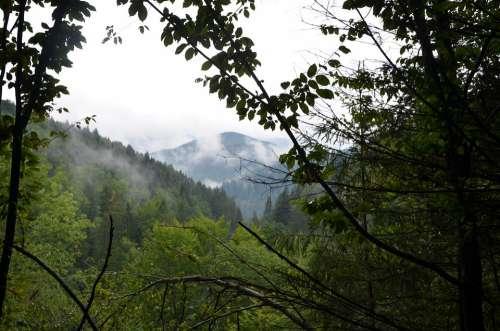Nature Mountains Fog