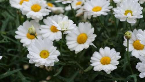 Nature Summer Spring Flower Floral Background