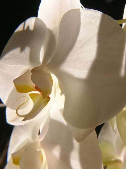 Nature Beautiful Orchid Blossom Bloom Plant