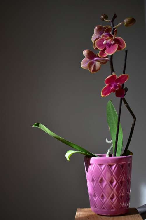 Orchid Plant Flowers Pink Petals Blooming