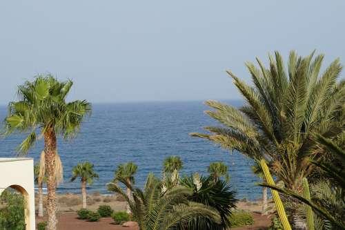 Palm Trees Sea Summer Tropical Holidays Sky