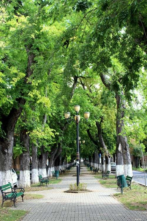 Park Targu Mures Romania Summer Landscape Nature