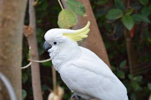 Parrot White Bird Feather Animal World Animal