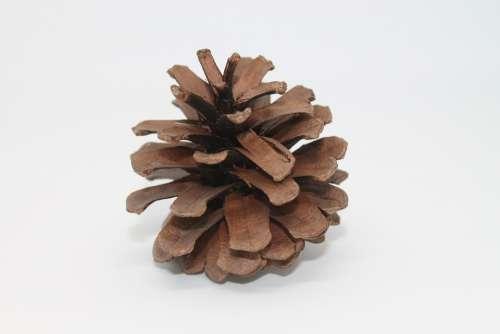 Pine Cones Macro Close Up Brown Wood Decoration