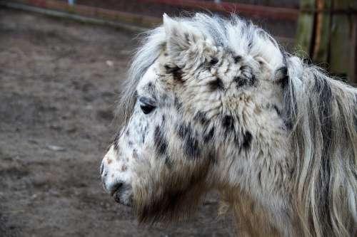 Pony Grasshopper Horse Mane Zoo