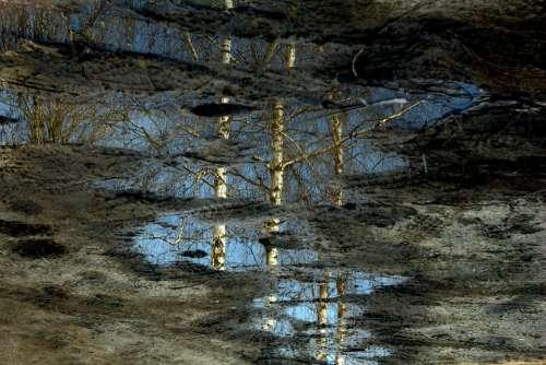 Pool Reflection Mirror Birch