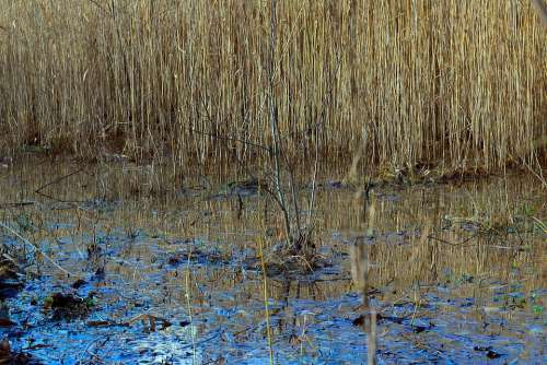 Pools Water Mirroring Nature Biotope Schlifrohr