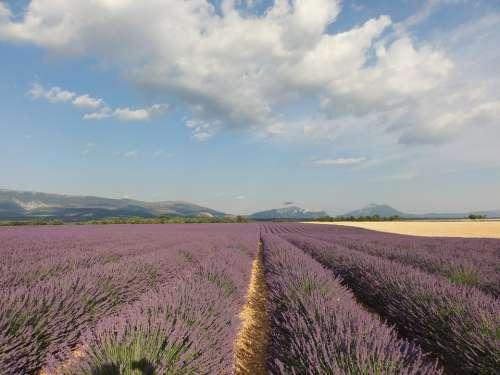 Provence Lavender Summer Flowers Purple Nature