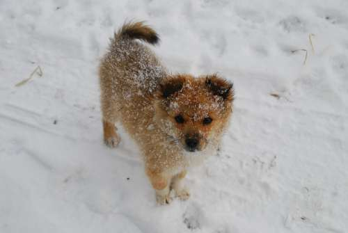 Puppy Winter Snow Dog Animal White Nature Cute