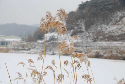 Republic Of Korea Winter Country Snow Korea