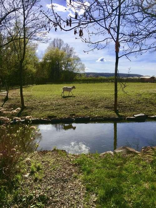 River Nature Goat Spring