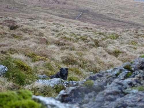 Rocks Dog Countryside Moorland Rock Animal