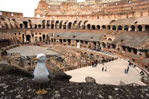 Rome The Coliseum Seagull Monument The Ruins Of The