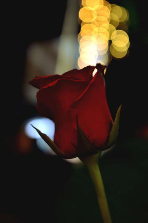Roses Bokeh Nice Candles Light Night Party