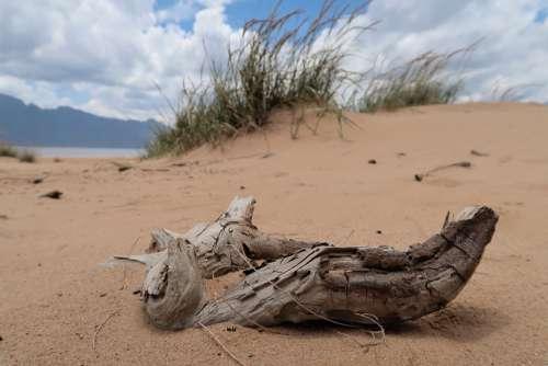 Sand South Africa Reservoir Nature Dune Grass