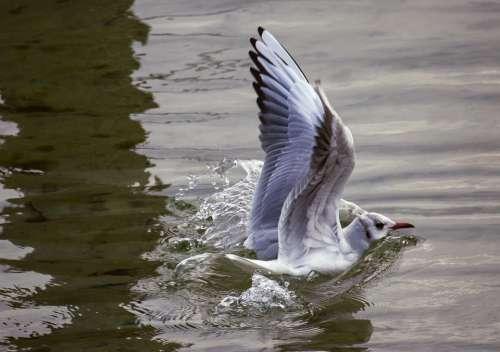 Seagull Bird Animal Animal World Water Land