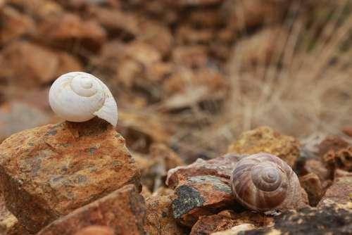 Shell Snails Stone Brown Yellow Ot White Kennedy