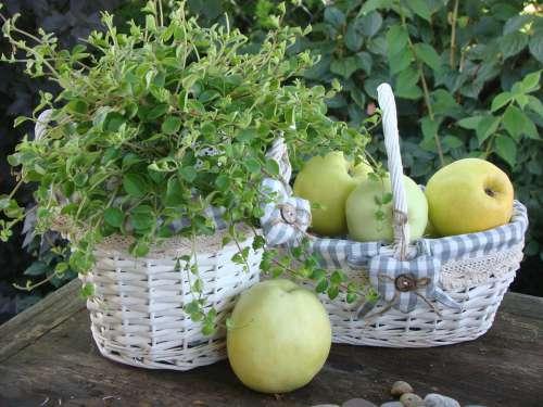 Shopping Cart Fruit Healthy