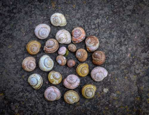 Snail Shell Snail Shape Snail Shell Casing Nature