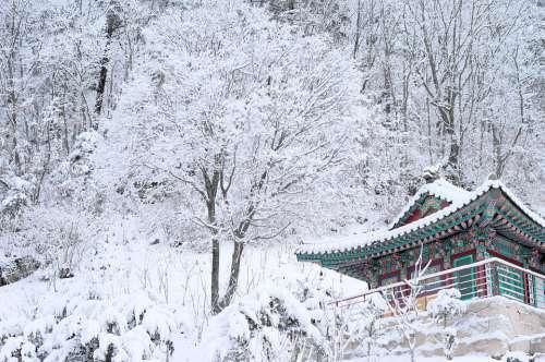 Snow White Korea Temple Buddihism Winter Nature