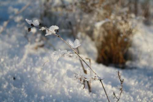 Snow Ice Winter Nature Frozen Frost
