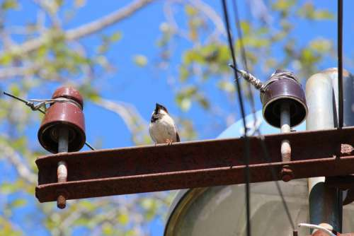 Sparrow Home Sparrow South India