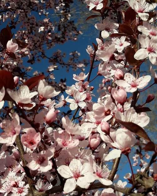 Spring Joy Happiness Sky Blue Rosa