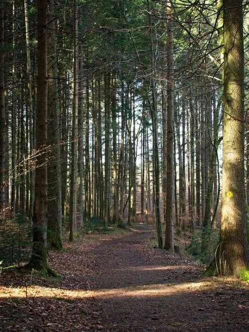Spring Forest Nature Trees Away Frühlingsanfang