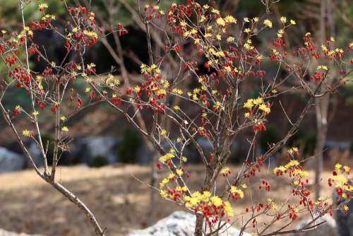 Spring Spring Flowers Nature Flowers Plants Wood