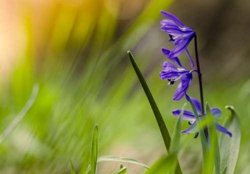 Spring Flowers Blue Ringtones Colorful Meadow