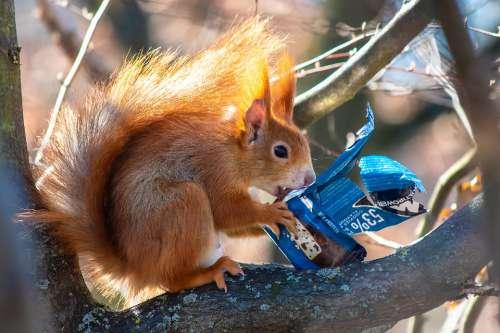 Squirrel Chocolate Sugar Delicious