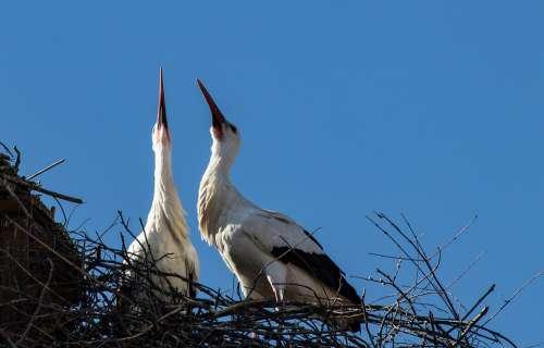 Stork Storks Bird Birds Animal Animal World