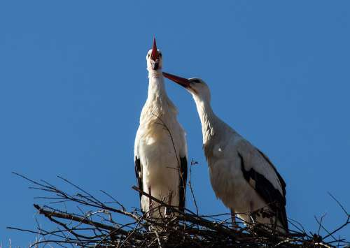 Stork Storks Bird Birds Animal Animal World