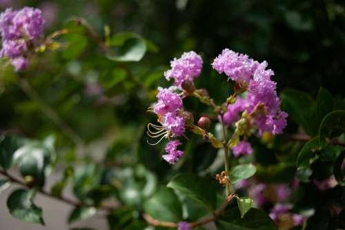 Summer Flowers Pink Flora