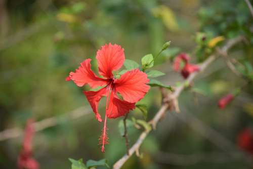Sundarban Forrest Nature Flower