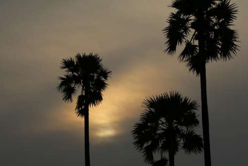 Sunrise Tree Landscape Nature Clouds Sunlight Sun
