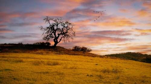 Sunset Cloud Warm Hillside Grassland Tree
