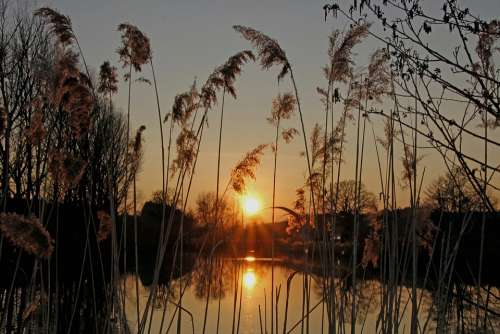 Sunset Pond Nature Reed Abendstimmung Evening