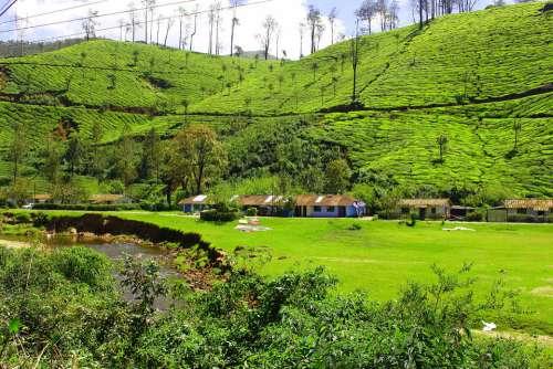 Tea Garden Hill Station Kerala Munnar Natural