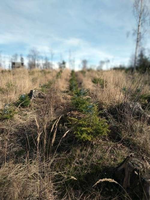 The Jeseníky Mountains Calamity Bark Beetle Nature